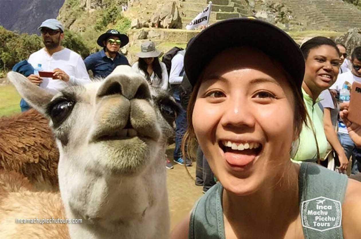alpaca-machu-picchu